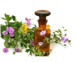 Лекарственные травы, рецепты полосканий для десен, при зубной боли