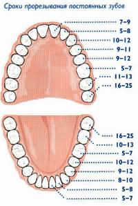 Схема смены зубов у детей на постоянные